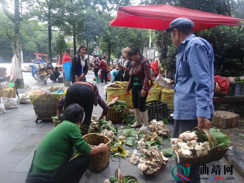 野生菌大量上市,食用须谨慎